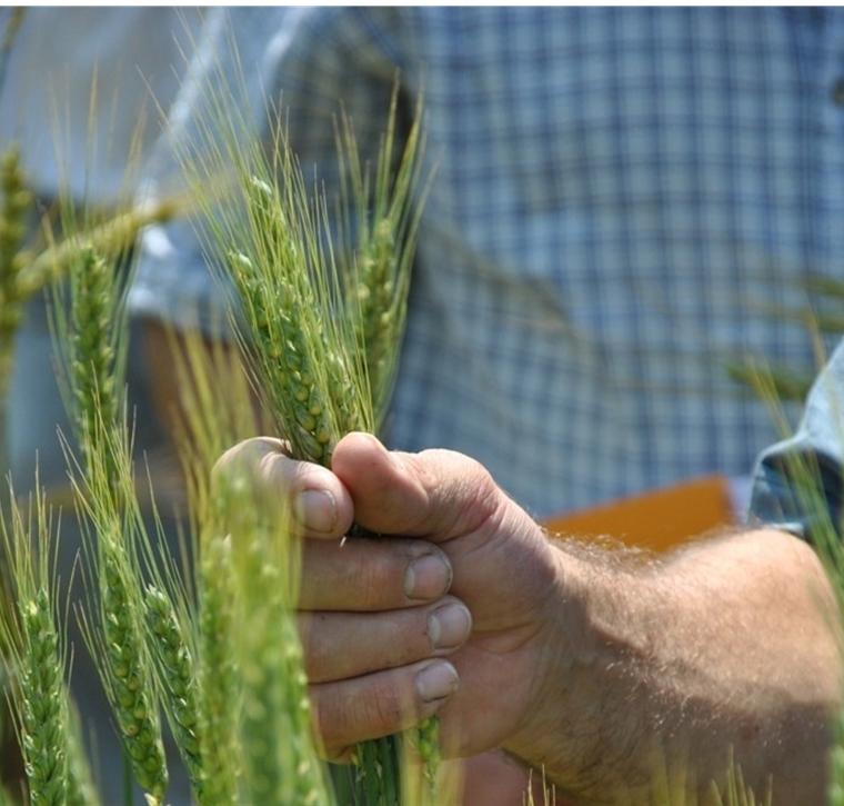 Collectif pour le développement de l'Agroécologie